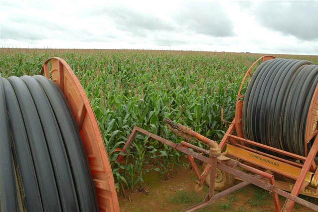 A cultura do milho é uma das que poderão ser prejudicadas no país, de acordo com especialistas