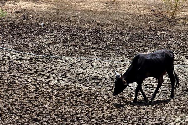 Falta de água compromete, especialmente, a pecuária do RN