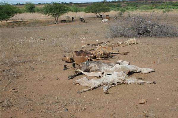 São Tomé no mês de maio - A Fazenda Pedra do Navio contava com quase 40 animais mortos, cujas carcaças ficavam amontoadas em um cemitério na propriedade. O único reservatório de água da fazenda, um pequeno açude, estava quase sem água.