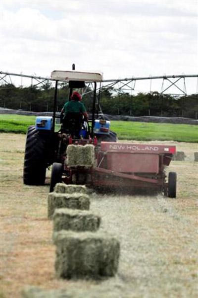 Apesar do solo rico, os projetos agrícolas ainda são tímidos no Vale