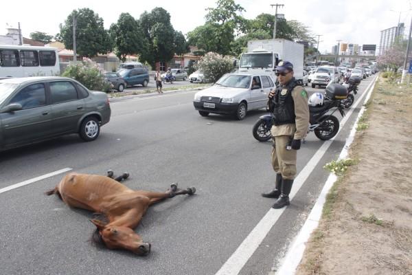 Após invadir a pista, o animal foi atropelado e o trânsito ficou lento até a retirada do cavalo para o canteiro central