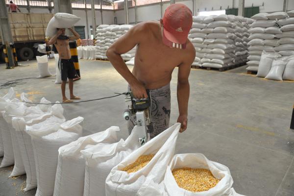 Uma saca de 50kg de milho custa, com subsídio, R$ 18,12. No mercado comum, a mesma quantidade chega a custar R$ 60,00