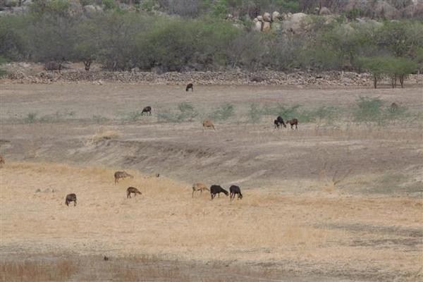 Durante a expedição, cenário mostra condições adversas para a pecuária
