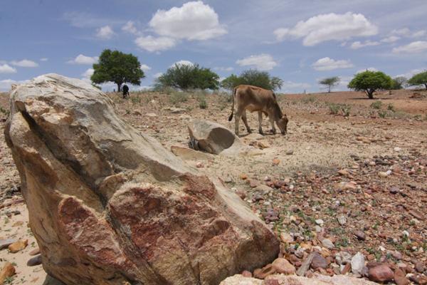 O programa emergencial para a seca foi criado em 2012 para recuperar e preservar a atividade em áreas em situação de emergência