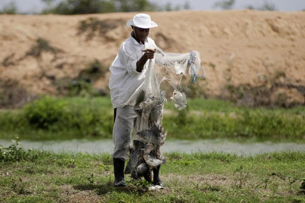 A criação do pescado associada ao plantio de frutas garante um salário mensal para as famílias