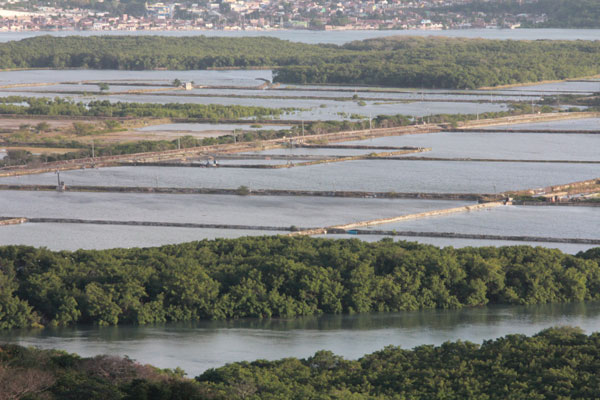 Fazendas de criação de camarão já instaladas em mangues tiveram a operação regularizada com a lei
