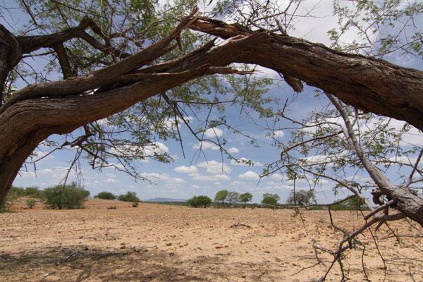 Aridez da grandes faixas de terra, provocada por secas cada vez mais frequentes, não impede o Nordeste de produzir alimentos para manter o homem no campo
