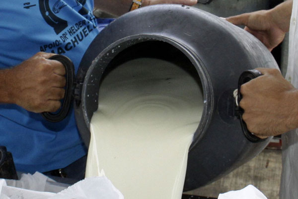 O leite cru vem sendo fiscalizado, após casos de adulteração