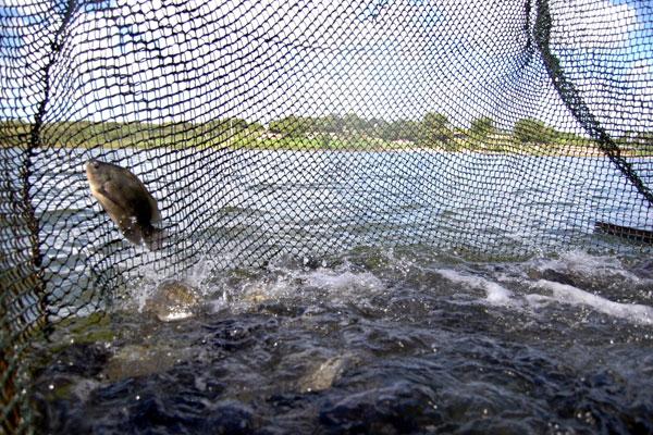 Os incentivos a pesca e aquicultura foram destacados pelo presidente da CNPA, Abraão Lincoln
