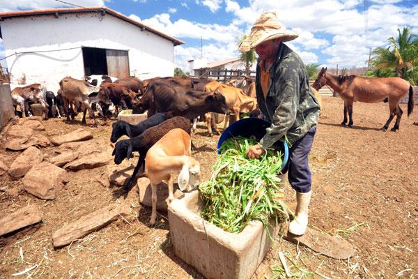 Projetos como a construção de reserva de alimentos para animais poderão ter taxas menores
