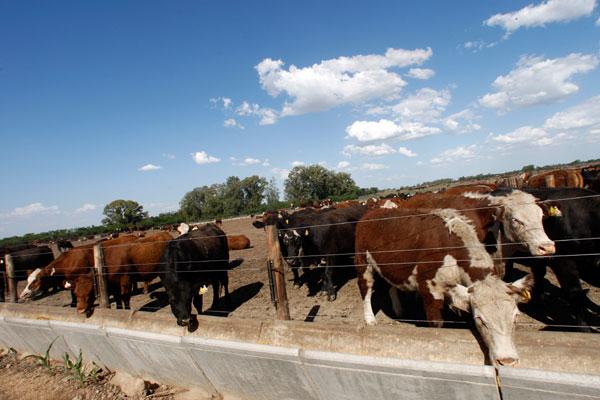 A Argentina caiu do terceiro lugar no ranking de exportadores de carne, quando vendia cerca de 700 mil toneladas/ano, para o 11º