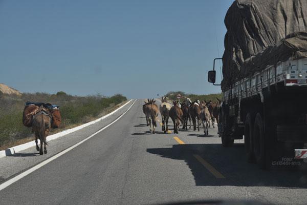 Os problemas das rodovias no Rio Grande do Norte são, principalmente, falta de sinalização, conservação, expansão e fiscalização