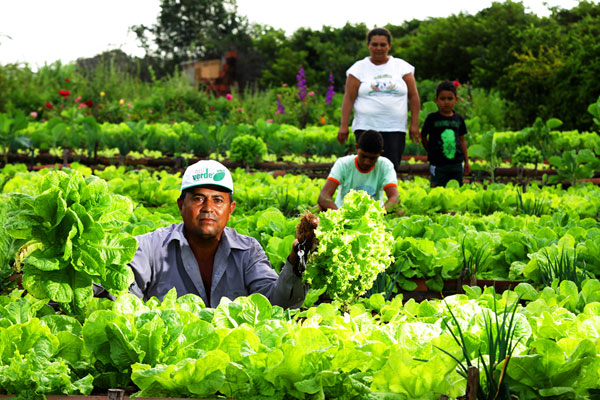 Agrotóxicos foram substituídos por adubos naturais