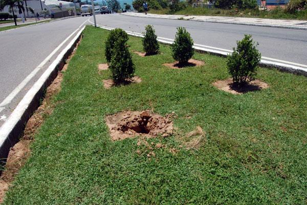 Plantas colocadas em canteiros estão sendo roubadas em Natal