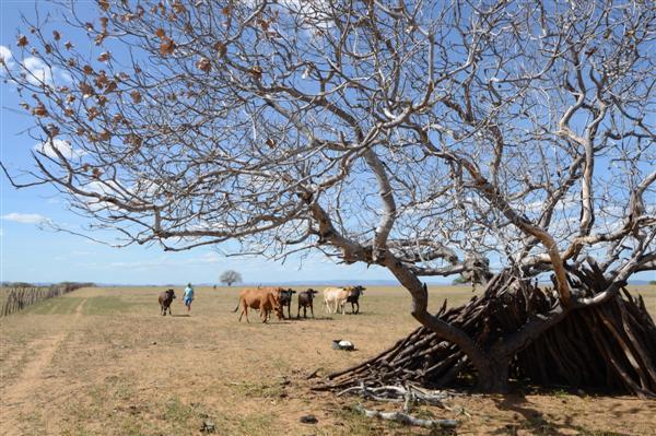 Novo decreto da seca atinge 150 municípios do RN e tem duração de 180 dias