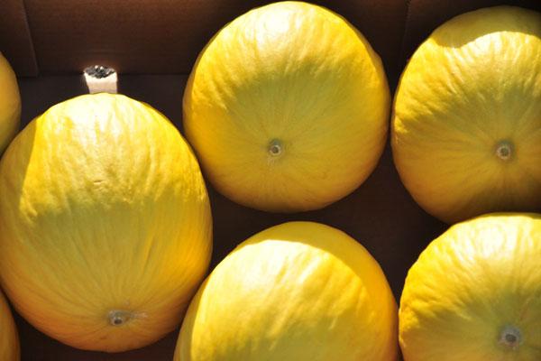 O RN responde por metade da produção de melão do Brasil