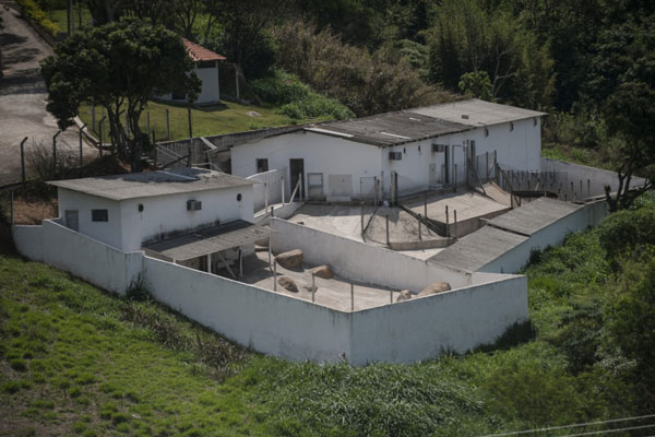 Sede do Instituto Royal, em São Roque, em São Paulo, de onde ativistas retiraram 178 cachorros da raça beagle