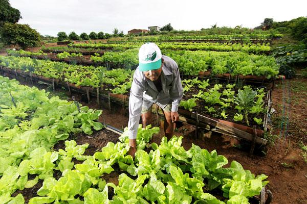 A agricultura orgânica exige eliminação completa de agrotóxicos e de produtos químicos