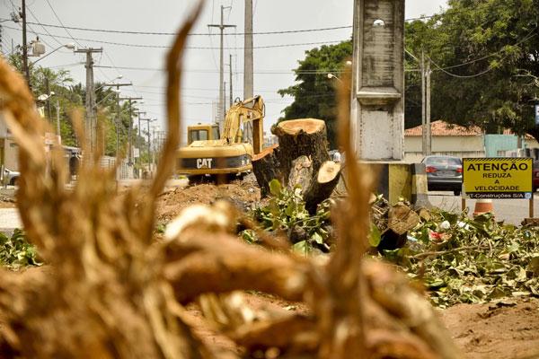 Semopi justificou que a retirada de árvores está sendo feita para evitar o comprometimento da nova pavimentação de concreto