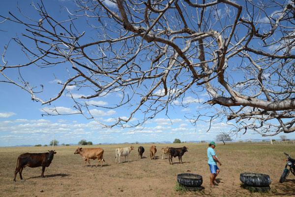 Governo alega que já se discute a disponibilidade financeira para o plantio das culturas de subsistência, reposição dos animais e melhoria das pastagens