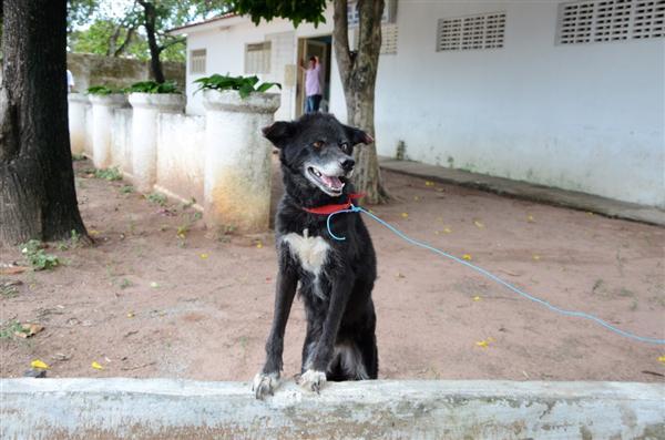 Animal foi deixado em frente ao Centro de Zoonoses, mas funcionários se recusaram a recebê-lo