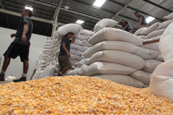 Armazém da Conab: Sem o subsídio, a companhia só poderia vender o milho a preço de mercado