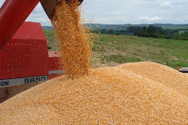 O preço do milho, no mercado de grãos por atacado, foi um dos fatores para a alta do IGP-M