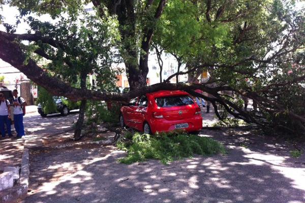 Carro teve teto amassado após queda da árvore