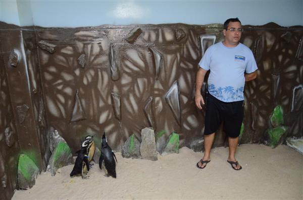 Diretor do aquário, Douglas Brandão, explicou que os pinguins foram doados pelo aquífero de Ubatuba, em São Paulo, e têm entre um e dois anos