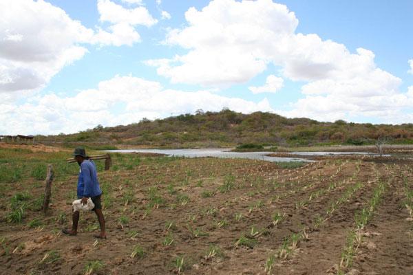 No Seridó, agricultores aproveitam água acumulada nos açudes e barreiros para fazer o plantio de capim e salvar os animais