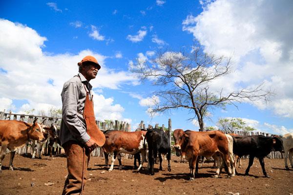 """A rotina, as histórias e o canto tradicional dos vaqueiros e aboiadores ganham vida no documentário """"Aboio: a poesia do vaqueiro, o lamento das caatingas"""""""