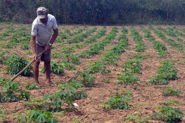Na Fazenda Barbará, entre Ceará-Mirim e Taipu, os agricultores ainda colhem a produção de 2013 e mantêm baixas as expectativas para as próximas colheitas deste ano
