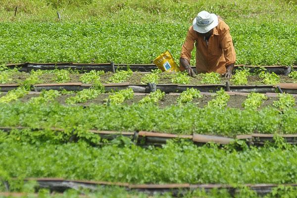 Produção orgânica da região de Gramorezinho abastece toda a Grande Natal: agricultura familiar