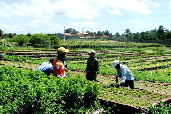 Área de produção envolve uma faixa de 20 hectares na zona Norte de Natal e adjacências