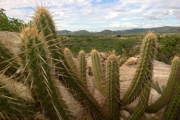 O Rio Grande do Norte vive hoje a seca verde: com chuvas suficientes para a folhagem, mas não para a maturação do fruto