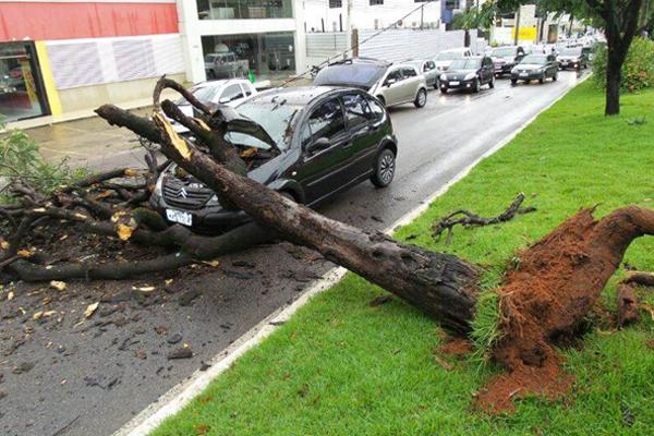 árvore cai sobre veículo na avenida Hermes da Fonseca