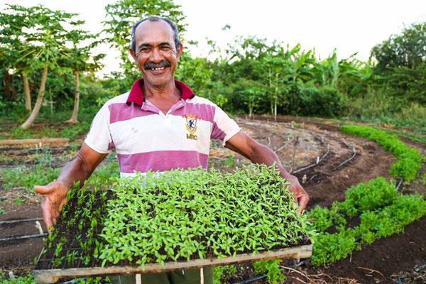 O agricultor Francisco França exibe as mudas cultivadas no próprio viveiro: Produção em alta