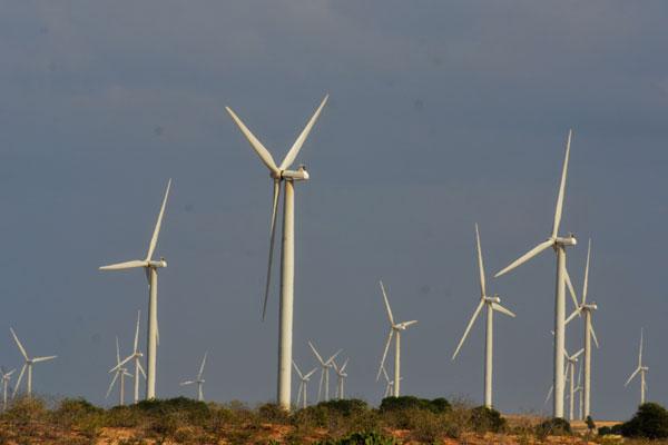 Parque eólico no RN: Estado registra a maior geração de energia eólica no Brasil e tem 40 usinas