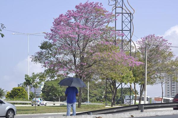 Em Natal, a estação mais florida do ano terá temperaturas de verão, segundo previsão climatológica para os próximos três meses