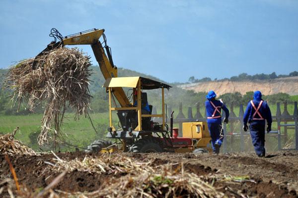 Uso de matérias-primas como a cana deve subir com lei que também mexe na composição do diesel