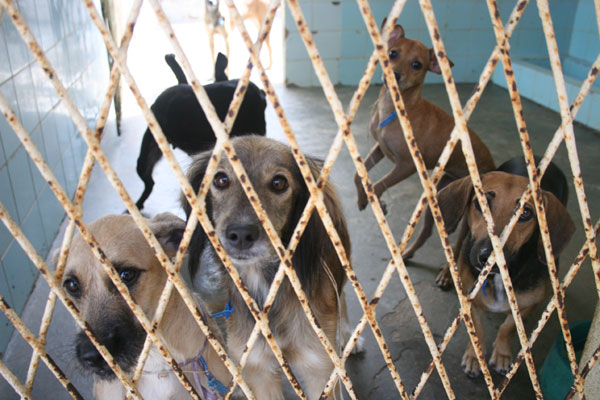 Sesap espera vacinar mais de 500 mil cães em todo o Rio Grande do Norte