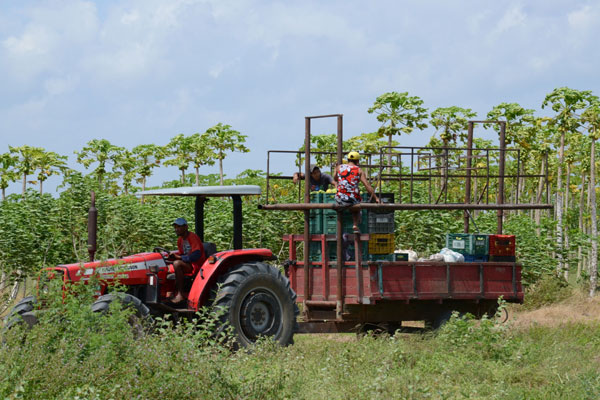 Segundo a Anfavea, o objetivo é estimular o desenvolvimento da agricultura familiar e promover modernização e produtividade