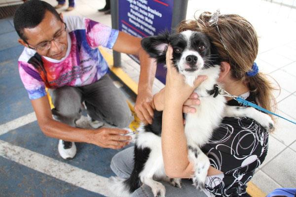 Meta da campanha de vacinação antirrábica é imunizar 80% dos cães e 60% dos gatos  na Capital do Estado