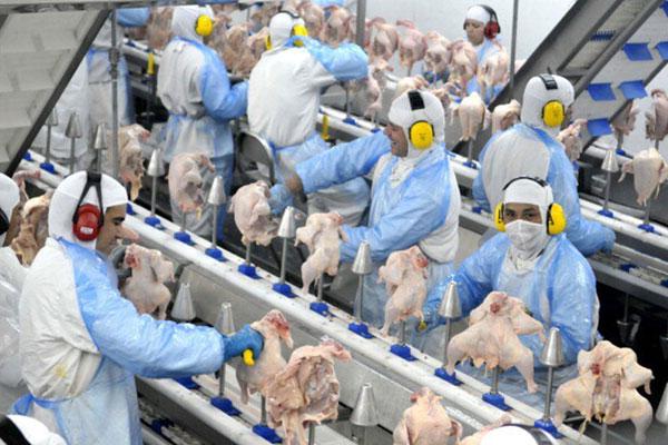 A carne de frango se destacou no setor de carnes, com o maior valor exportado em outubro