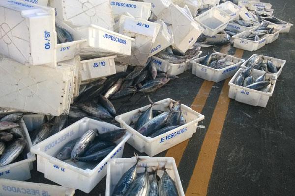 Caminhão carregava atum e gaiado