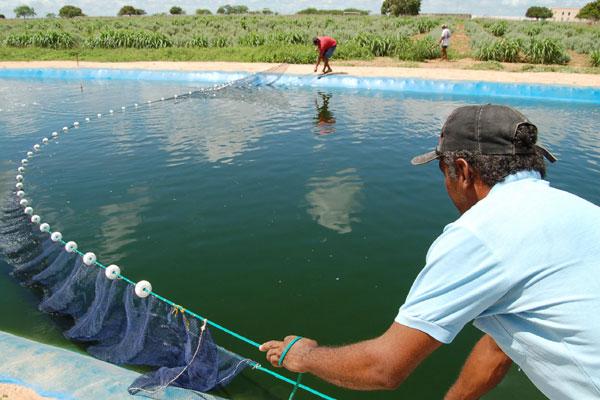 Naserra piscicultura com til pias for Como criar tilapias