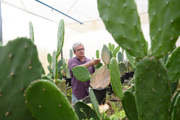 Marcone César, da Emparn, explica estudo sobre a plantação de palma irrigada que vem sendo desenvolvido no Seridó e Oeste