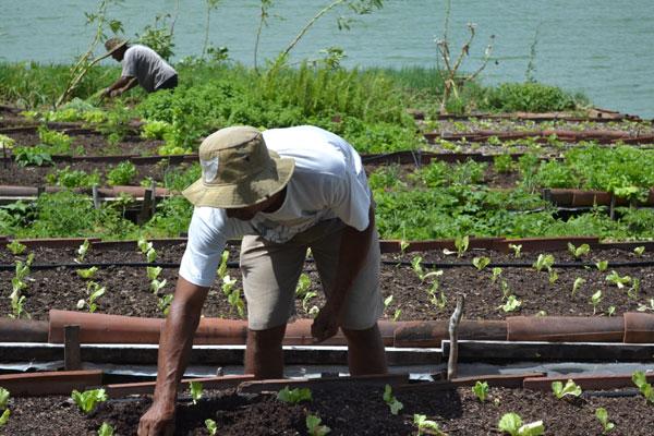 A medida pode beneficiar quem vive, por exemplo, da agricultura orgânica: Produtor pode se enquadrar como pequeno negócio