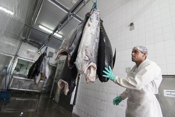 Peixes para exportação: Escassez de voos tem levado cargas para aeroportos em outros estados
