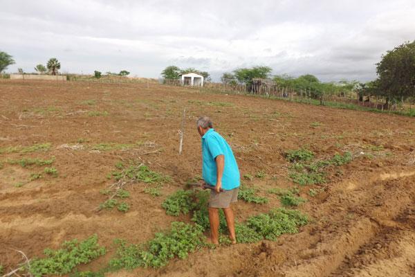 Em Angicos, choveu 12 mm no fim de semana, mas os agricultores começaram a cortar a terra e fazer plantio, principalmente de feijão, aproveitando a terra molhada